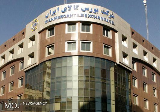 عرضه ۱۸۶ هزار تن جو دامی ۱۲ استان در قالب طرح قیمت تضمینی
