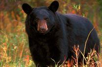 کشته شدن کوهنورد ۱۶ ساله توسط خرس در مسابقات آلاسکا