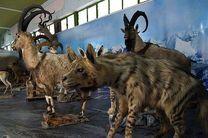 موزه حیات وحش آموزش و پرورش لرستان در ایام نوروز پذیرای علاقه مندان است