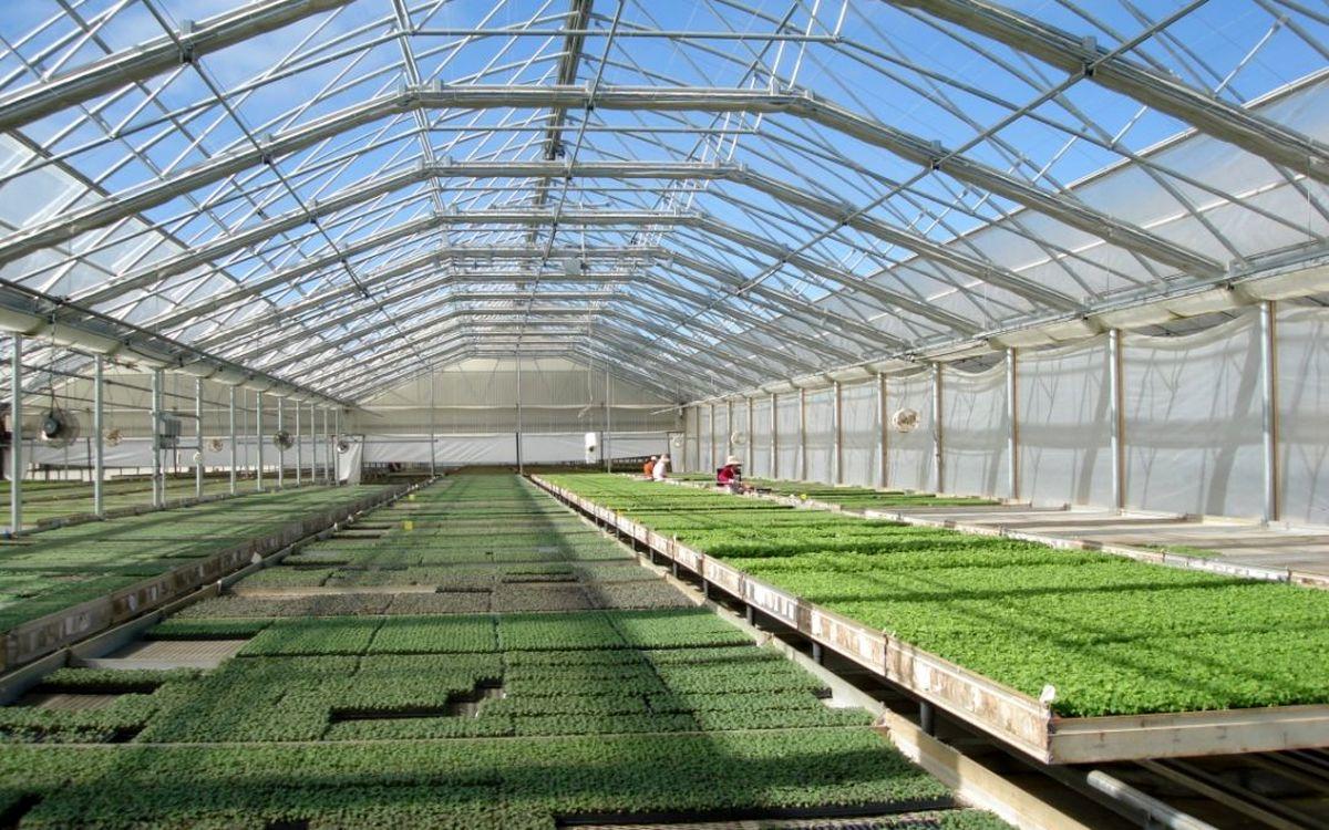 یزد پیشرو و مستعد در توسعه شهرک های کشاورزی