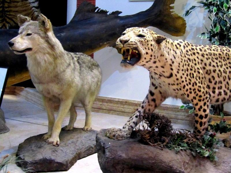 افتتاح نخستین نمایشگاه تخصصی عکس حیات وحش درکاشان