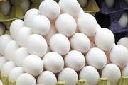 قیمت تخم مرغ ۲.۸ درصد افزایش داشت