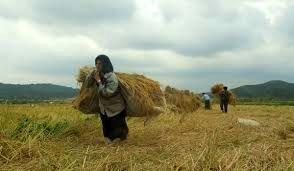 کشاورزان پی برده اند که باید از آب به درستی استفاده کرد