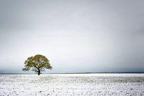 ارتفاع برف در اردبیل به 6 سانتیمتر رسید/روزهای آفتابی در راه است