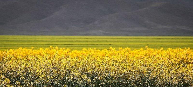 سهم شبکه تعاونیها در تولید بذر کشور چقدر است؟