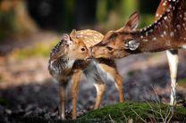 تنوع بالای گونه جانوری در پناهگاه دره انجیر/پناهگاه حیات وحش دره انجیر مهمترین پل ارتباطی گونه های جانوری است