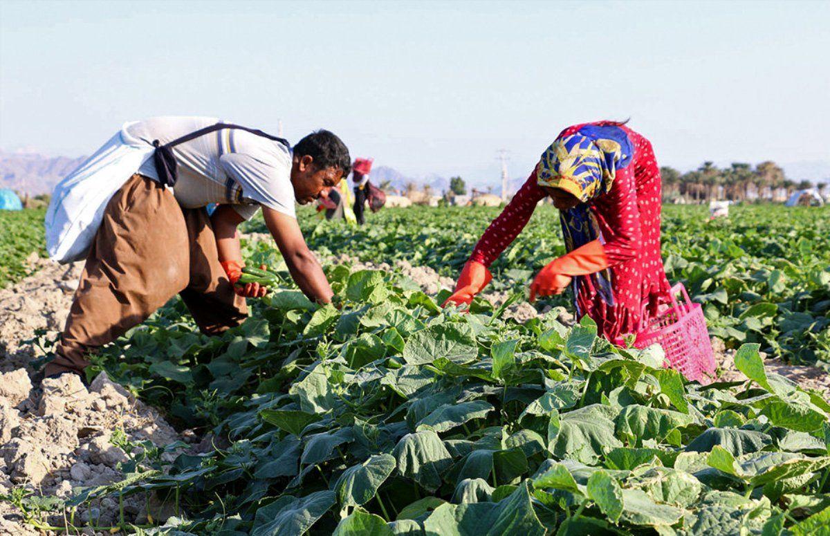 گلایه از تبعیض میان کشاورزان استان هرمزگان