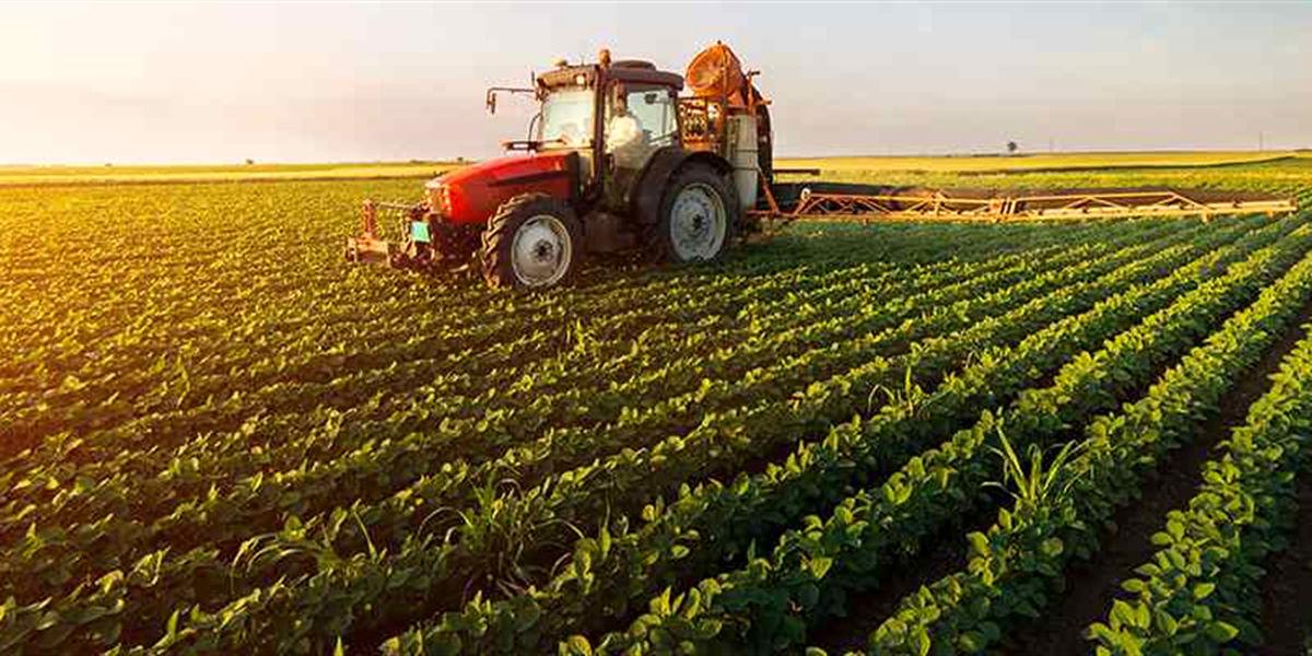 رعایت الگوی کشت در توسعه پایدار کشاورزی اهمیت دارد
