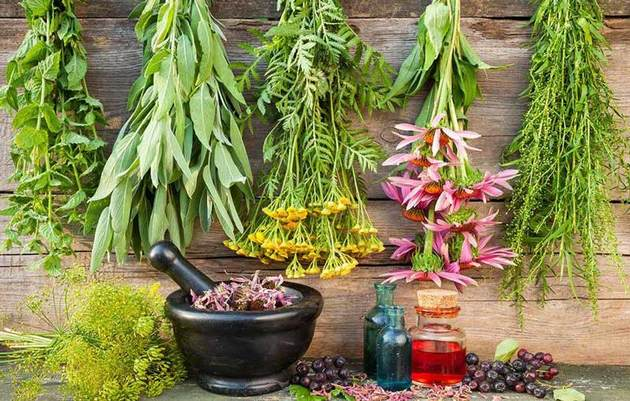 گل گاوزبان و گل محمدی بیشترین سطح زیرکشت گیاهان دارویی را در مازندران دارد