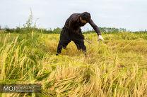 بهرهبرداری از آبهای زیرزمینی تنها برای انجام کشت اول برنج در مازندران است