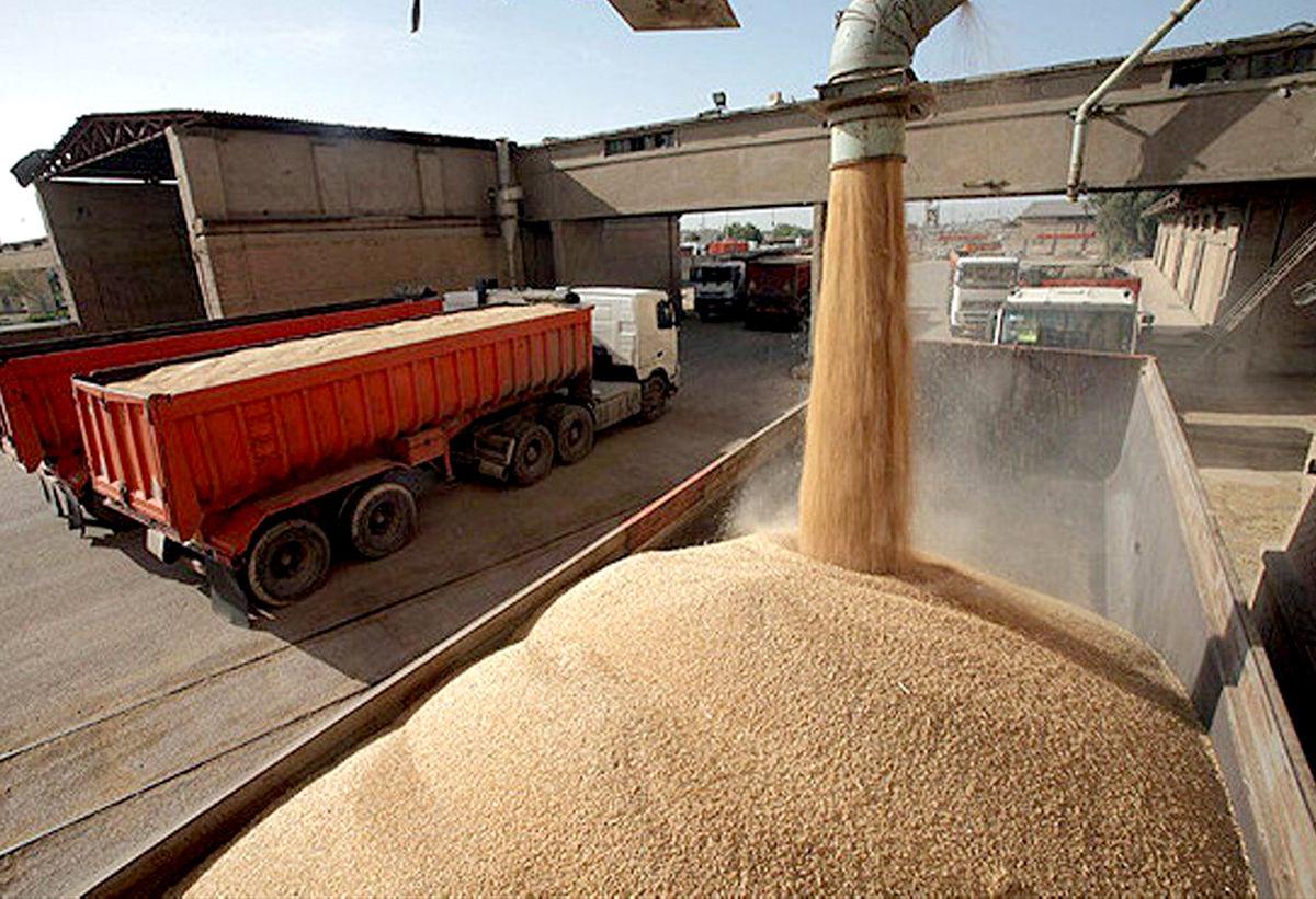 خشکسالی، عامل کاهش خرید تضمینی گندم در خراسان رضوی بوده است