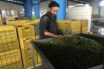 کودهای شیمیایی در محصولات باغی امان صادرات را گرفته است