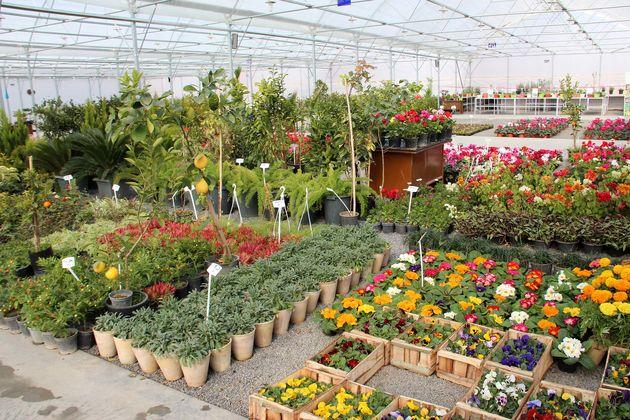 دانش فنی گل و گیاه در نوشهر وجود دارد