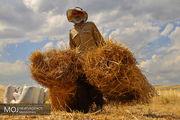 پیش بینی برداشت  230 هزار تن گندم در اصفهان