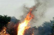 جنگل«ام الدبس» آتش گرفت