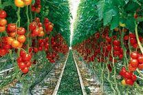 تنظیم بازار با کشت های گلخانه ای/ هر هکتار از کشت های گلخانه ای 11 اشتغال مستقیم ایجاد می کند
