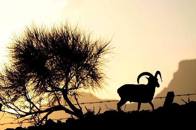 رونق بازدید گردشگران از منطقه حفاظت شده گنو