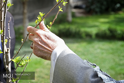 کاشت درخت توسط مقام معظم رهبری در روز درختکاری