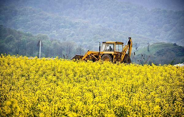 برداشت بیش از 180 تن کلزا از مزارع برخوار