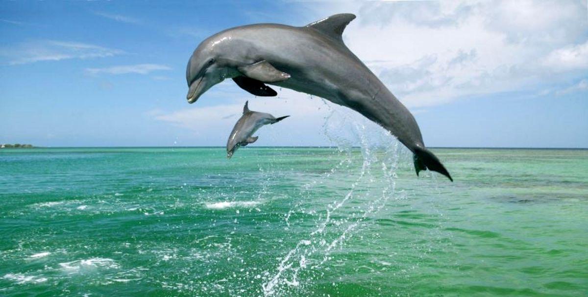 انتقال آخرین دلفین به کیش در پی تعطیلی دلفیناریوم برج میلاد