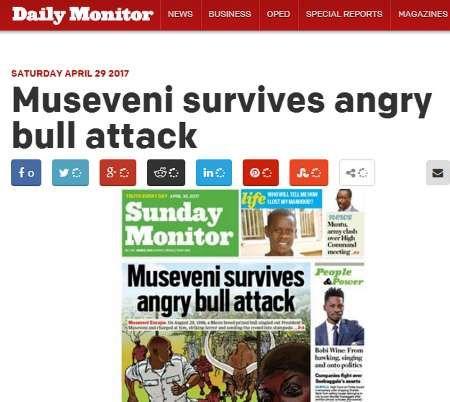 رئیس جمهور اوگاندا از دست گاو فرار کرد