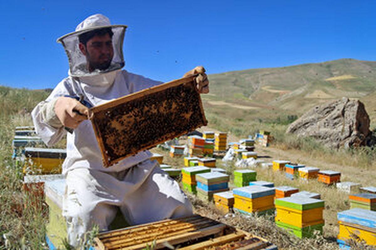 کوچ بهاره 180 زنبوردار مهاجر به آمل آغاز شد