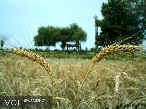 توصیههای پنج روزه هواشناسی به کشاورزان سراسر کشور