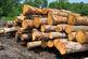 حال بازار چوب خوب نیست/ 50 درصد امدیاف کشور از طریق واردات تامین می شود