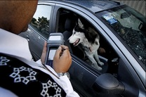 طرح «نورالمبین» در گیلان آغاز شد / برخورد با ترویج مسائل غیر فرهنگی مانند سگگردانی
