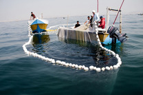 صید برخی آبزیان در آبهای هرمزگان ممنوع شد