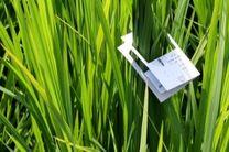 اجرای طرح مبارزه بیولوژیک با کرم ساقه خوار برنج در ساری