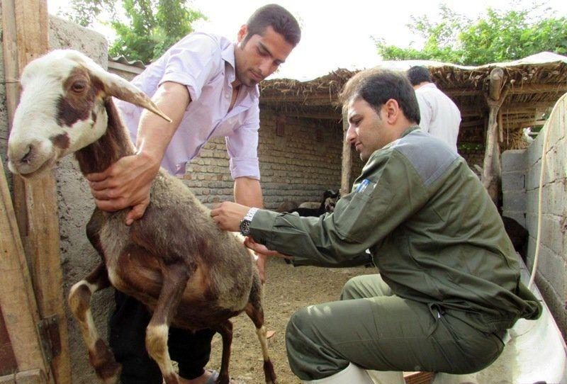 واکسیناسیون بیش از ۲۰ بز علیه بیماری آبله در پارسیان