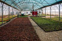 باغ تحقیقات گیاهان دارویی با ۵۰ گونه در بوستان علوی قم راهاندازی میشود