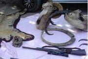 کشف 3 تخته پوست حیوانات وحشی و 5 گونه تاکسیدرمی شده حیات وحش در آمل