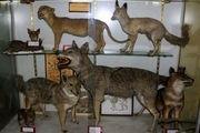 بازدید از موزه تنوع زیستی محیط زیست در اصفهان رایگان است