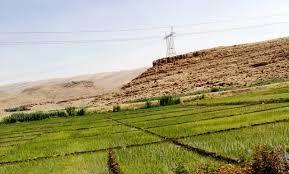 120 هکتار از اراضی شهرستان گیلانغرب امسال زیر کشت برنج است