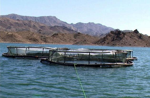 سالانه 100 میلیون قطعه بچه ماهی سفید در رودخانههای مازندران رهاسازی می شود