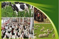 تولید انواع محصولات دامی در سال جاری بیش از 533 هزار تن پیش بینی می شود
