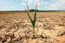 مردم جهان آماده مقابله با اثرات خشکسالی نیستند