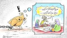 جای خالی نظارت کارشناسان، قیمت مرغ را نجومی کرد