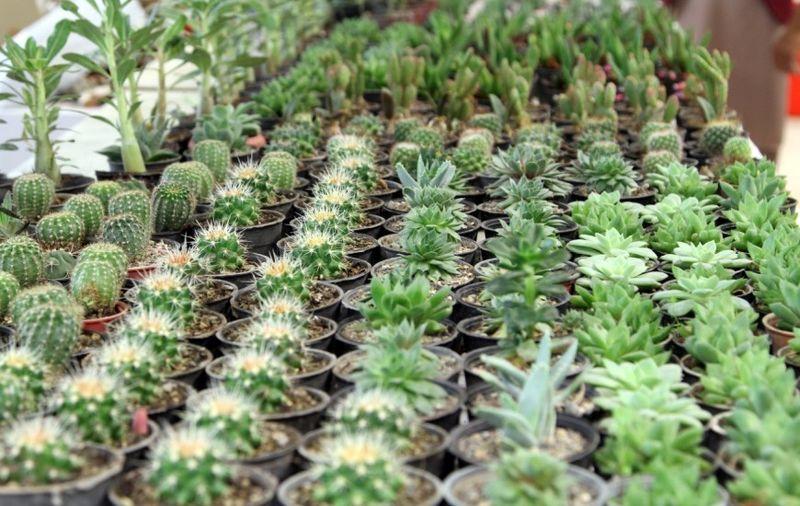 نخستین نمایشگاه بین المللی گل و گیاه در رودسر