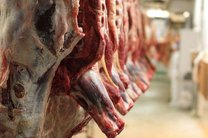 توزیع گوشت گرم استرالیایی در بندرعباس و قشم