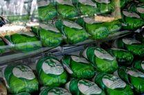 تولید هزار تن مرغ سبز در کرمانشاه