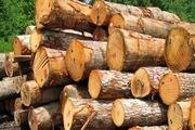 یک تُن چوب قاچاق در سوادکوه کشف و ضبط شد