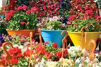 کاشت 4 میلیون بوته گل