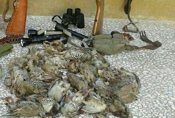 شکارچیان غیرمجاز کبک و تیهو در پلدختر دستگیر شدند
