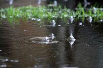 ورود سامانه بارشی به کشور از امروز