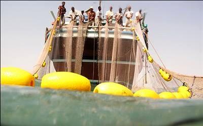 ایران دارنده رتبه اول صید فانوس ماهیان در اقیانوس هند است