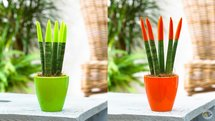 بهترین گل های آپارتمانی/کدام گیاهان هوای خانه را تصفیه می کنند؟