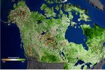 قطب شمال سرسبز می شود